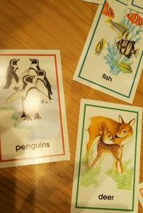 単複同形名詞 絵カード